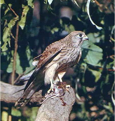 птицы беларуси фото и названия - В мире ...: atcm.pp.ua/ptitsy-belarusi-foto-i-nazvaniya.html