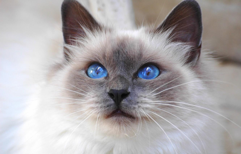 Своя Кошка