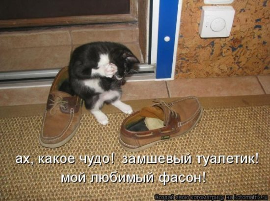Видеть во сне кота, ловящего мышей и презентующего результаты своей ловли другим кошкам, олицетворяет ваше тщеславие.