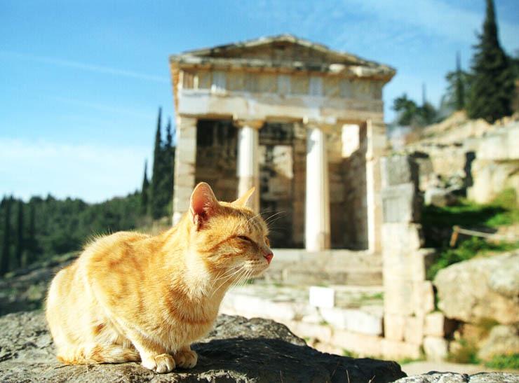 греческие кошки картинки для
