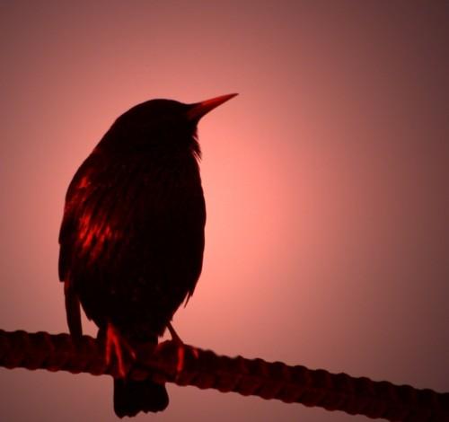 Фото расположено в архивах: птица коричневая с хохолком
