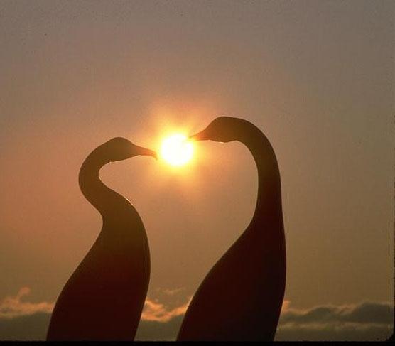 ...library ЖИВОТНЫЕ / ANIMALS птицы / birds 0205051.