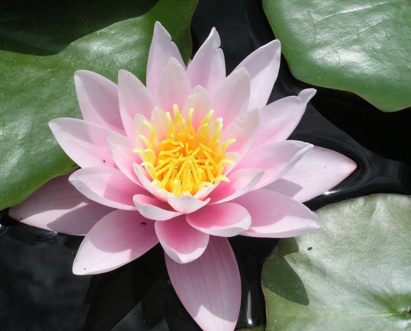 Позы в сексе в картинках распустившийся цветок лотоса