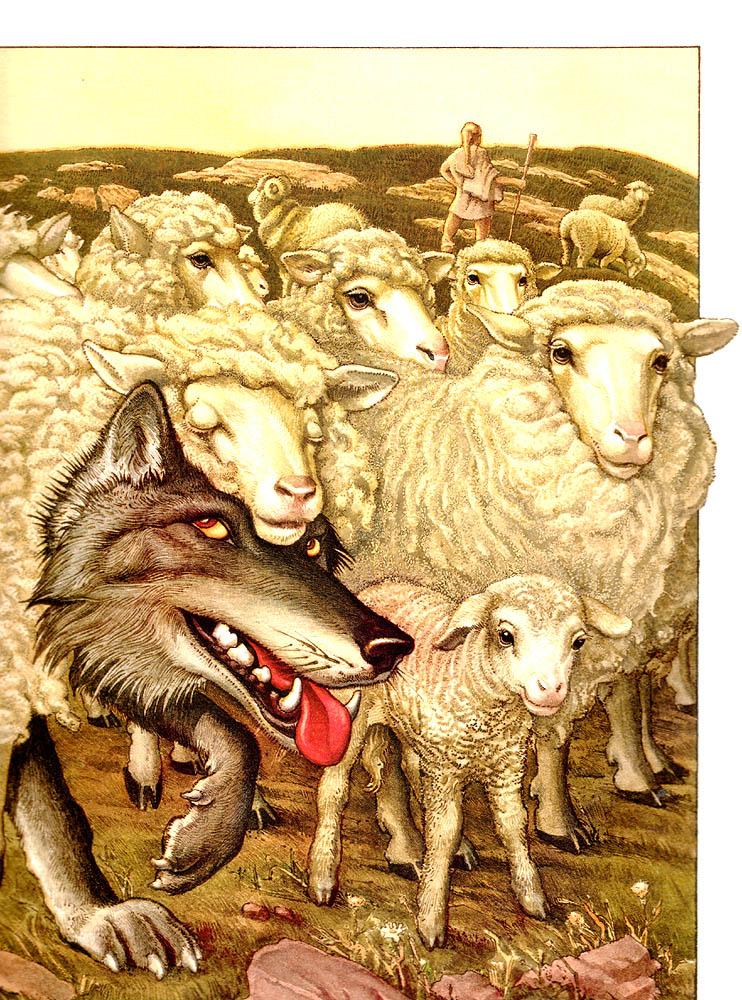 блогеру картинки волки овечка коронель