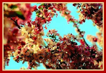 порно фильмы трактат любви ветка персика фото
