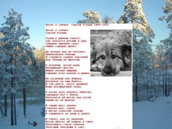 С есенин про собаку стих