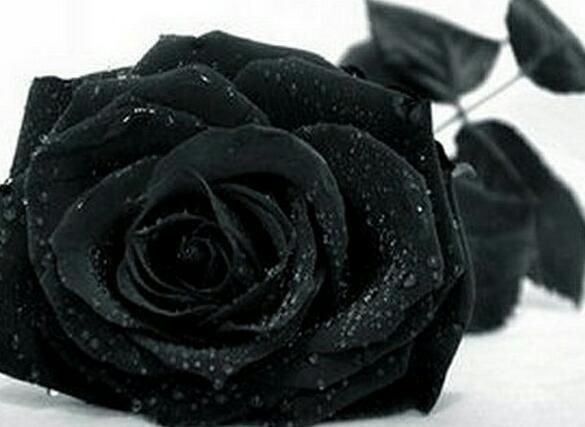Чёрная роза Песня (Юлиания