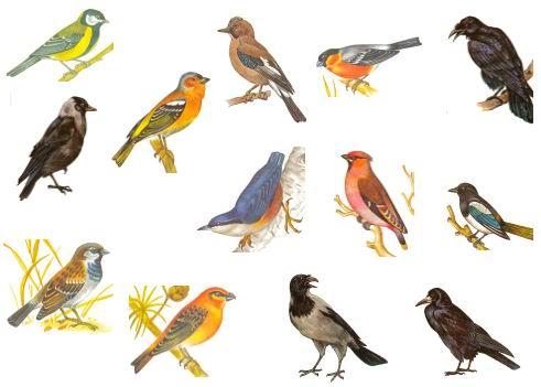 детские рисунки о зимних птицах.
