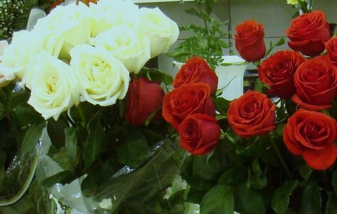 фото красные и белые розы