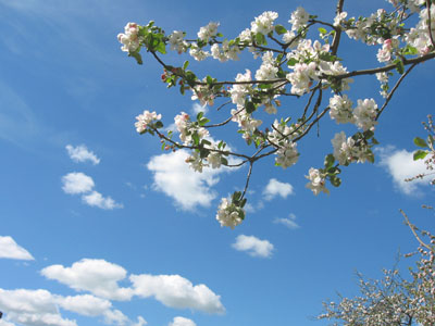 Картинки за что я люблю весну