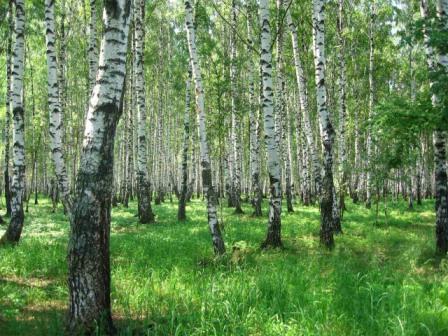 http://www.stihi.ru/pics/2008/04/08/1607.jpg