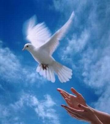 Ты лети, моя птица счастья...