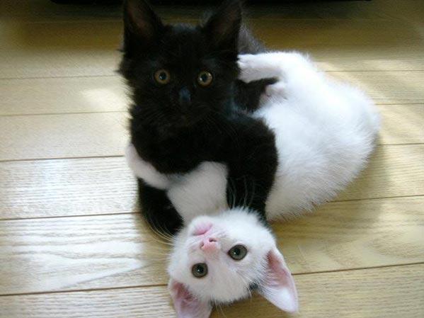 Фильм Черная Кошка Белый Кот