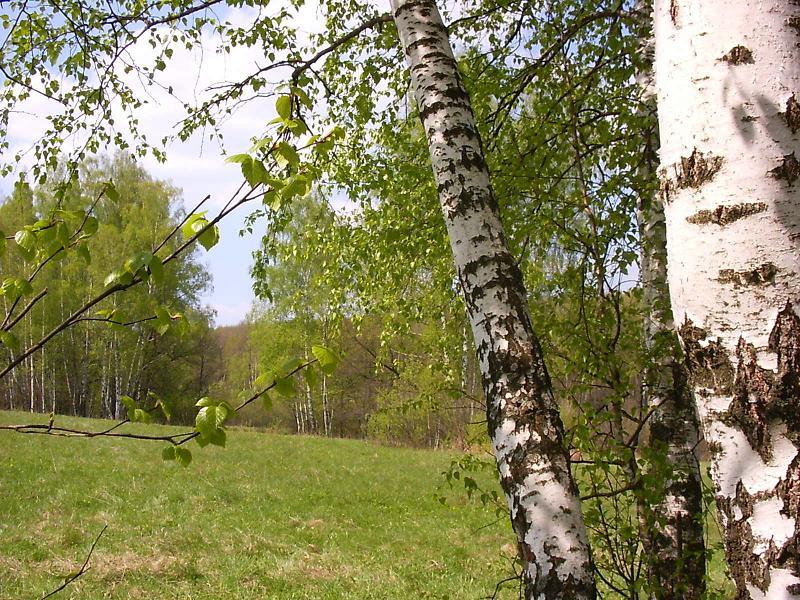 http://www.stihi.ru/pics/2008/08/08/577.jpg