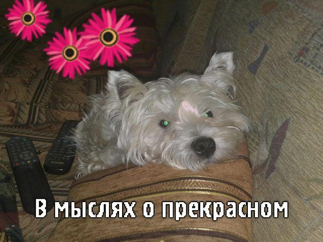 http://stihi.ru/pics/2008/09/27/1518.jpg