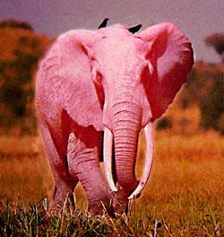 Стих сниться мне розовый слоник