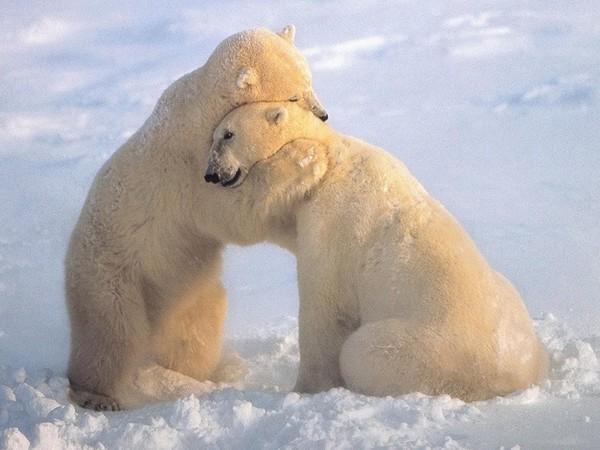 было неплохо, я люблю белых медведей красивые