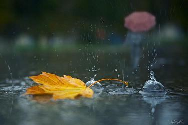 скачать шум дождя торрент скачать - фото 4