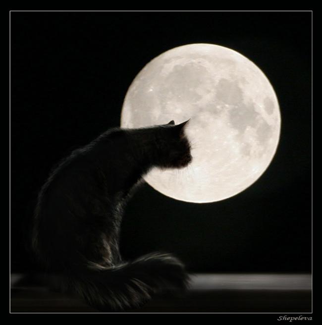 Фото Чёрный кот в полнолуние.