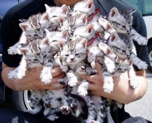 16 кг котов. Илья Плохих
