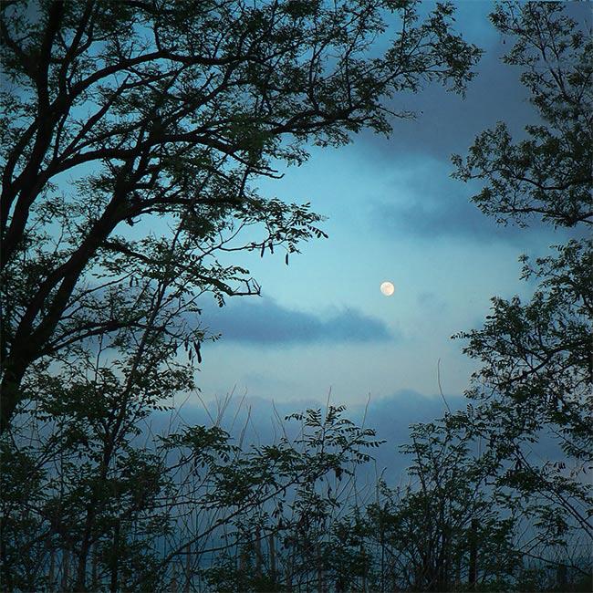 Вечером синим вечером есенин