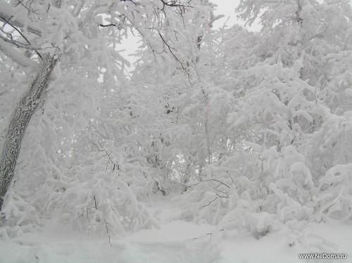 http://www.stihi.ru/pics/2008/11/26/281.jpg