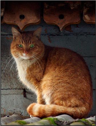 http://www.stihi.ru/pics/2008/12/01/627.jpg