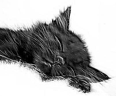 Один день из жизни кота в стихах