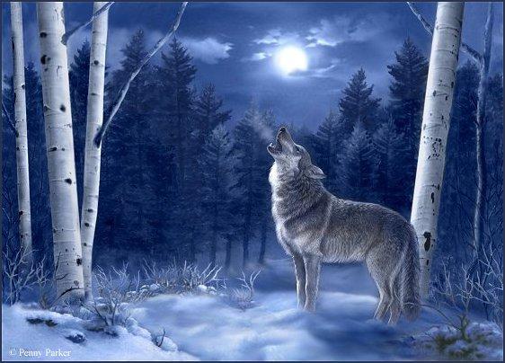 http://www.stihi.ru/pics/2009/01/19/3982.jpg