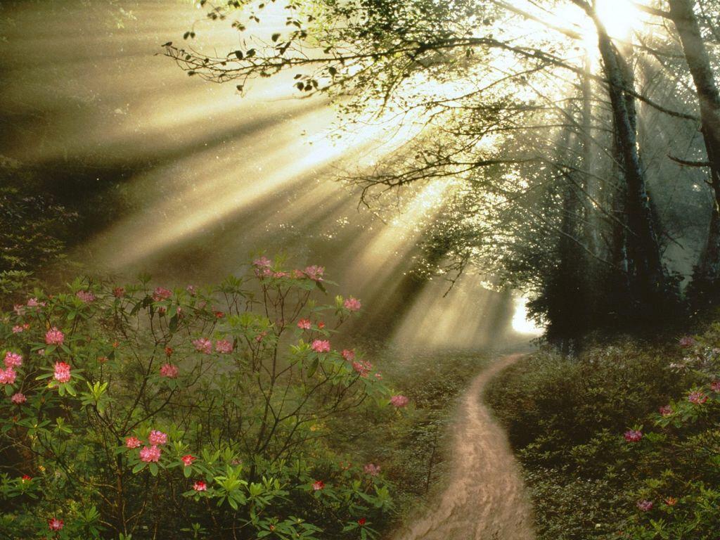 Открытки утро в лесу, картинки
