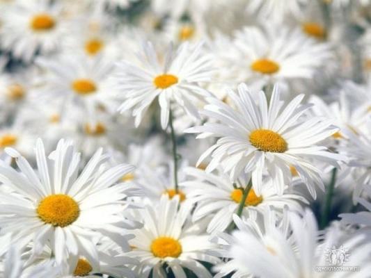 http://www.stihi.ru/pics/2009/02/01/2594.jpg