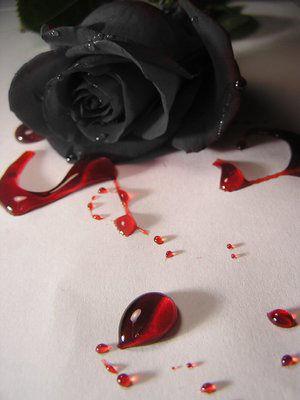 Черная роза и красная кровь