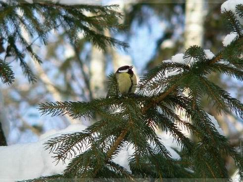 http://www.stihi.ru/pics/2009/02/23/50.jpg