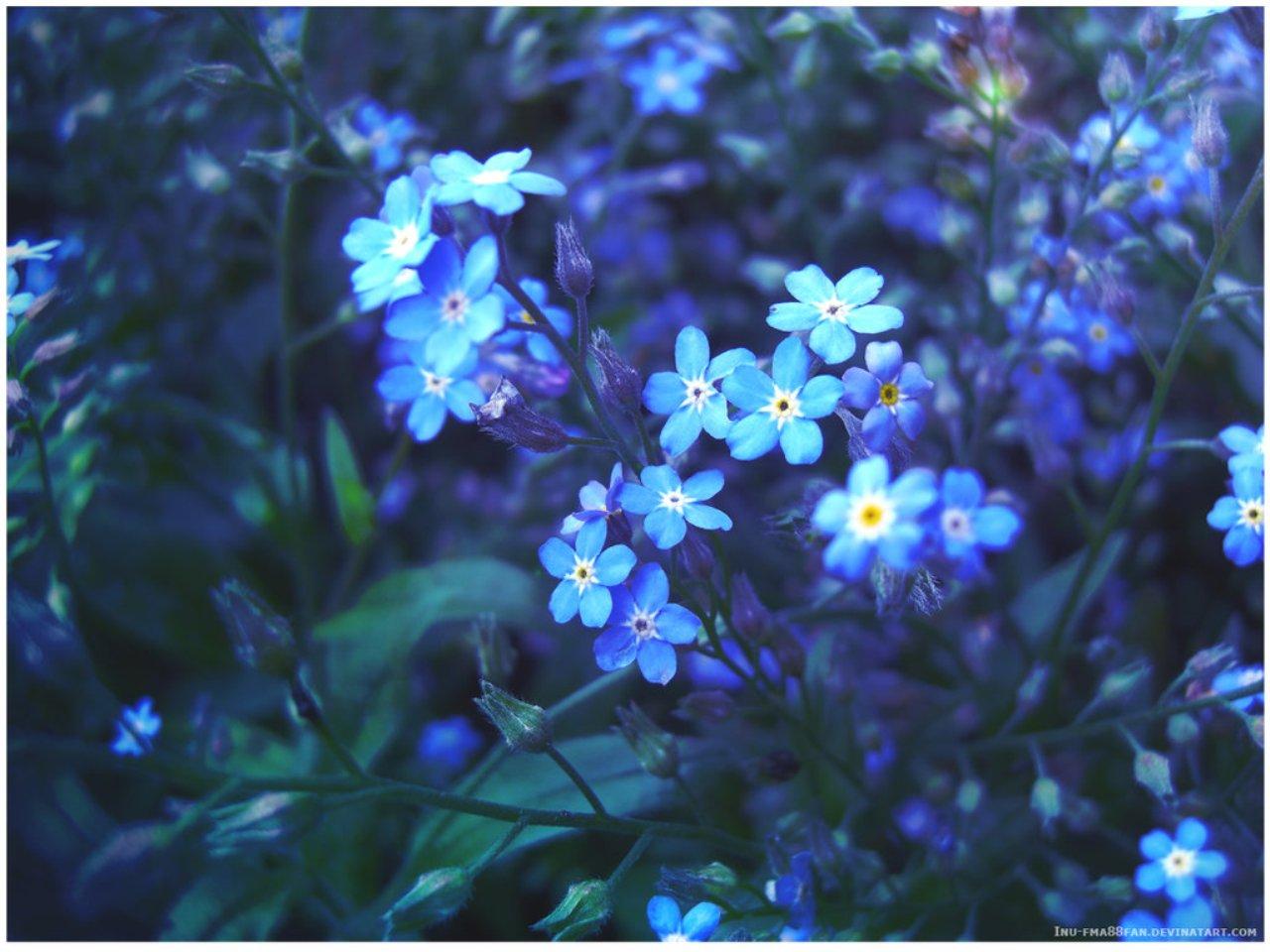 http://www.stihi.ru/pics/2009/03/01/1689.jpg