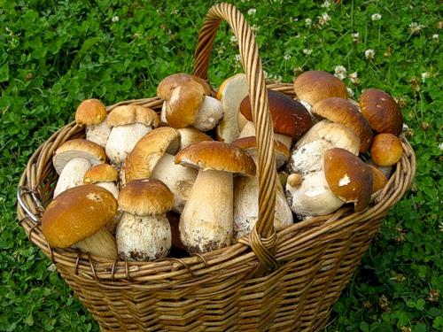 За грибами! Задача - считалка (Светлана Иберда) / Стихи.ру