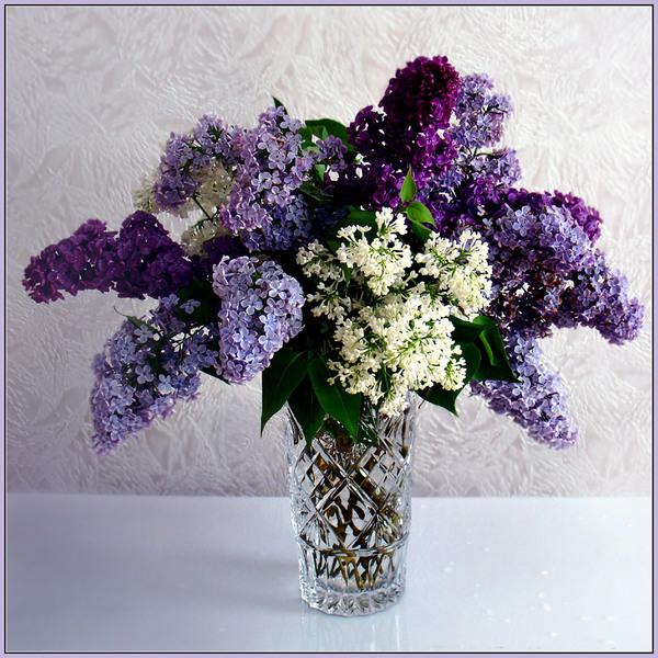 http://www.stihi.ru/pics/2009/03/28/1679.jpg