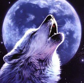 Фото волка и волчицы - 25ffe