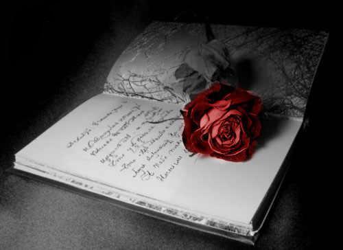 Ах ты роза цветок любви грешной
