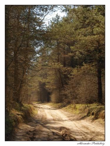 Photo *** by Aleksandr Poddubniy. landscape, forest.