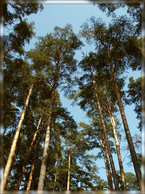 http://www.stihi.ru/pics/2009/04/30/6709.jpg