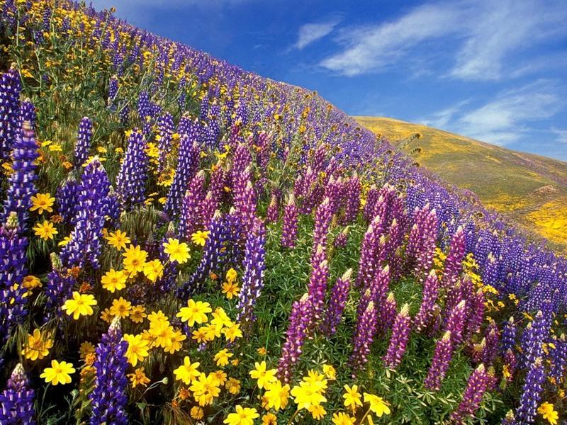 Полевые цветы здравствуйте царь
