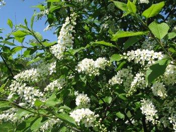 http://www.stihi.ru/pics/2009/05/18/811.jpg