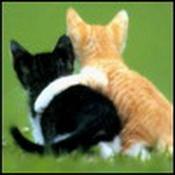 Картинки рыжий и черный коты