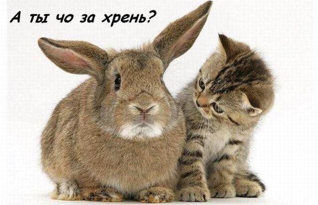 https://www.stihi.ru/pics/2009/06/16/1855.jpg