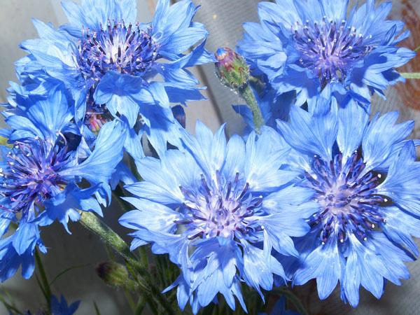 красивые цветы фото: