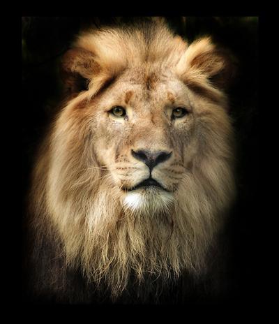 любви под знаком льва