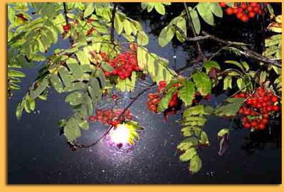 http://www.stihi.ru/pics/2009/08/11/3685.jpg