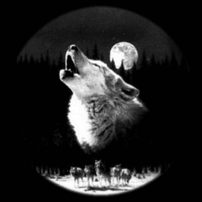 волк и луна картинки - фото 8
