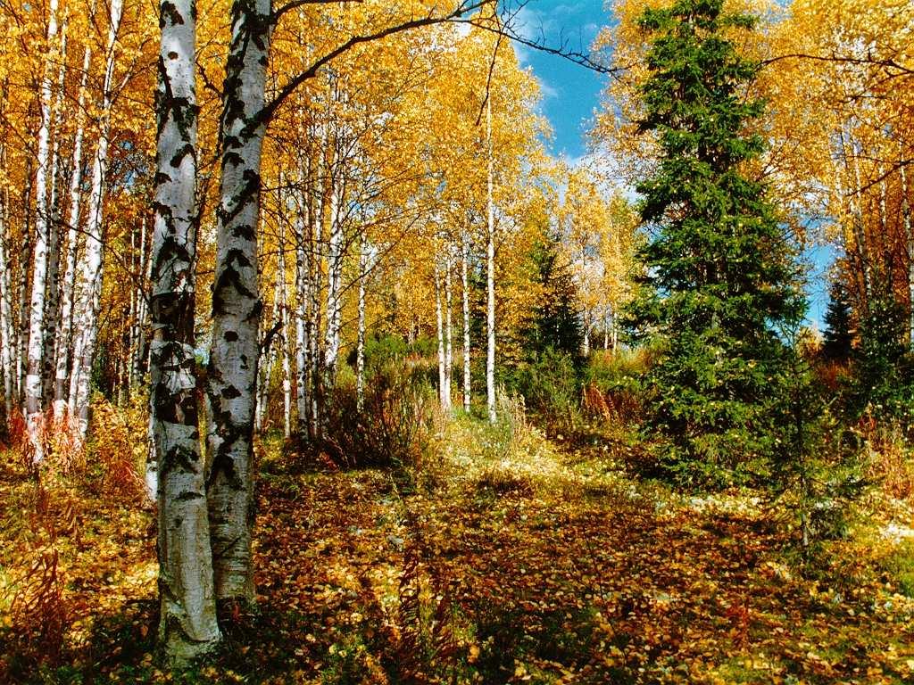 Восеннем лесу фото 469-65