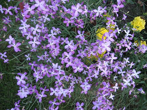 многие цветы которые пазнут ночью страховое законодательство устанавливает